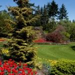 fiore giardino — Foto Stock