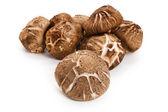 Shiitke Mushroom — Stock Photo