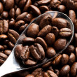 Coffee Bean — Stock Photo #5900012
