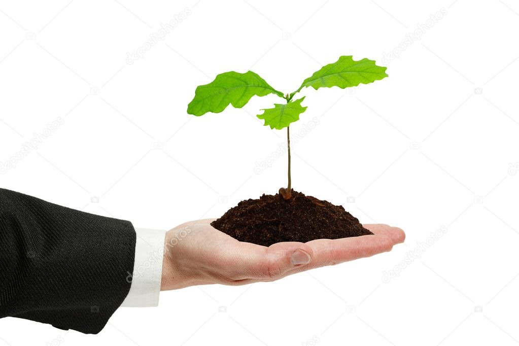 Small sprout of oak in the hand of businessman isolated on the white background. — Stock Photo #5727809