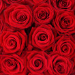 Red roses. — Stock Photo #5796051