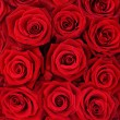 Red roses. — Stock Photo