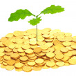 Oak sprout grown from money. — Stock Photo