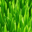 Green grass with dew drops. — Stock Photo