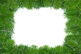 Frame of pine boughs. — Stock Photo