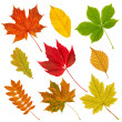 Collection of autumn leaves. - Stock Photo