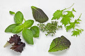Salad greens and spices — Stock Photo