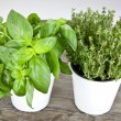 Basil and thyme — Stock Photo