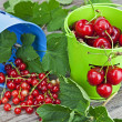 Cherries and currants — Stock Photo #5873625