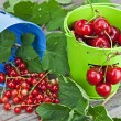 Cherries and currants — Stock Photo
