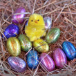 Easter chick — Stock Photo #5875607