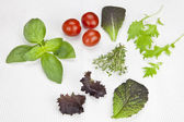 Lettuce and herbs — Stock Photo