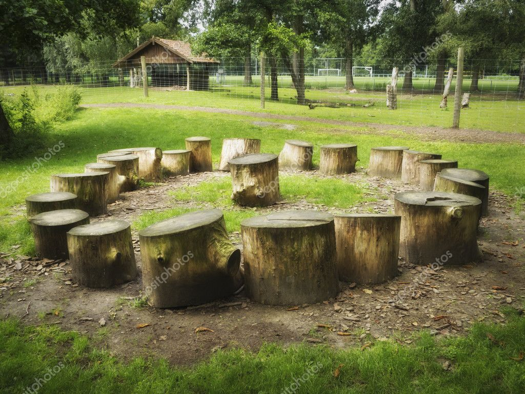 Tree stumps in circle shape with one in the middle  — Stock Photo #6534519