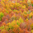 Fall colors in autumn season - Stock Photo