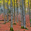 Fall colors in autumn season - Stock fotografie