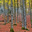 Fall colors in autumn season - Stok fotoraf
