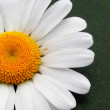 Partial view of a daisy — ストック写真