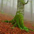 Tree in the fog — Stock Photo