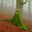 Stock Photo: Tree in the fog