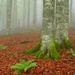 Trees in the foggy autumn — Stock Photo