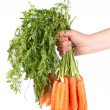 Holding a bunch of carrots — Stock Photo #5883522