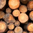 Logs stacked background — Stock Photo