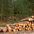 Logs stacked — Stock Photo #5883708
