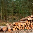 Logs stacked - Stock Photo