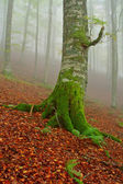 Tree in the fog — Stock Photo