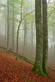 Cores no outono — Foto Stock