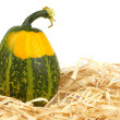 Yellow and green pumpkin - Stock Photo