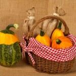 Yellow and green pumpkins — Stock Photo