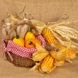 Yellow pumpkins and cobs — Foto de Stock