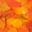 colorful autumn background — Stock Photo #6339798