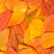 Colorful autumn background — Stock Photo #6339803