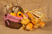 Yellow pumpkins and cobs — Stock Photo