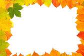 Cadre de feuilles colorées — Photo