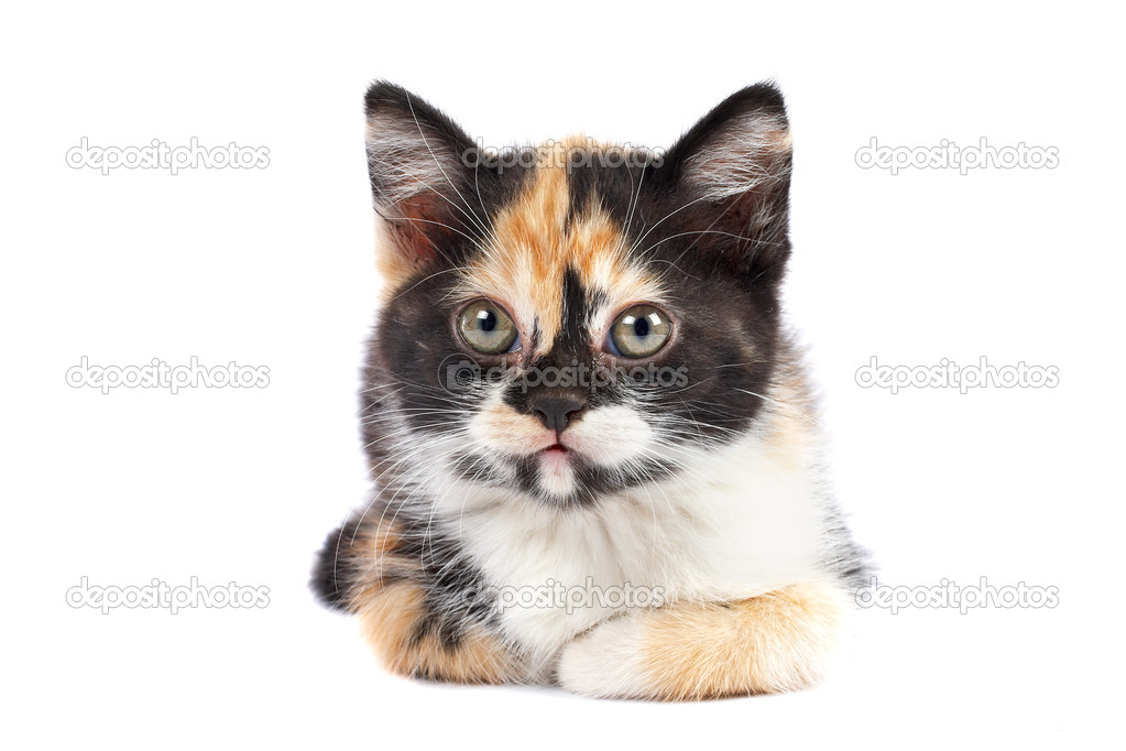 A kitten sits on a white background — Stock Photo #6339586