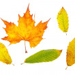 Assortment of leaves - Stock Photo