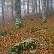Stock Photo: Colors in the foggy autumn