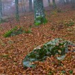 Colors in the foggy autumn — Stock Photo #6344561