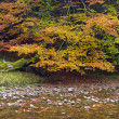 berg rivier in de herfst — Stockfoto #6344601