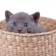 Basket with kitten — Stock Photo