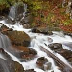 Autumn brook — Stock Photo #6345983