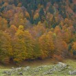Autumn colors in the forest — Stockfoto