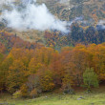 Autumn colors — Stock Photo #6346003