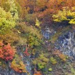 Autumn colors in the forest — Stock Photo #6346010