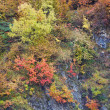 Stock Photo: autumn colors in the forest