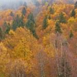 Autumn colors — Stock Photo #6346024
