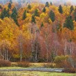 Mountain river in autumn — Stock fotografie